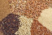 picture of quinoa  - a variety of gluten free grains  - JPG