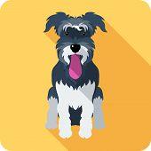 pic of schnauzer  - Vector dog Miniature Schnauzer breed icon flat design - JPG
