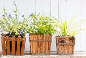 image of wooden fence  - Close up of Small pot plant with wooden fence - JPG