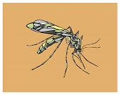 pic of mosquito  - Hand drawn vector illustration or drawing of a mosquito - JPG