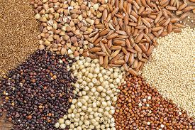 image of millet  - a variety of gluten free grains  - JPG