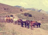 picture of herd horses  - a herd of horses in the mountains - JPG