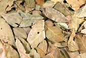 foto of bay leaf  - Background from the bay leaves - JPG
