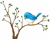 picture of nightingale  - Cute little blue bird on the branch of the tree - JPG
