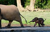 stock photo of baby animal  - Africa - JPG