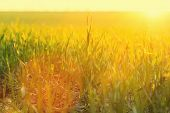 stock photo of grassland  - summer grassland - JPG