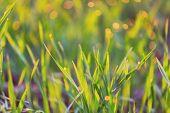 stock photo of wet  - wet grass - JPG