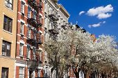 foto of brownstone  - New York City street scene in Spring - JPG
