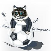 foto of kitty  - Cute angry kitty tear the ball football background - JPG
