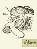 picture of mushroom  - Set of linear drawing mushrooms - JPG