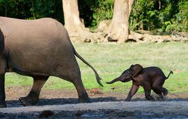 pic of baby animal  - Africa - JPG
