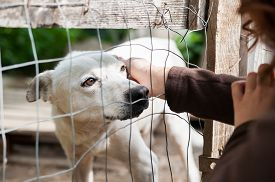 foto of dog-house  - Stray dog behind the corral of a dog refuge and a girl petting it through the net - JPG