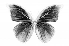 foto of inverted  - Black and white image of pattern background with lot of different butterflys - JPG