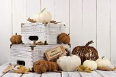 Happy Thanksgiving Tag With Shabby Chic Autumn Decor Against A White Wood Background poster