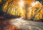 Amazing View With Colorful Autumn Forest With Asphalt Mountain Road poster