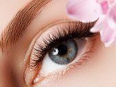 Beautiful Macro Shot Of Female Eye With Extreme Long Eyelashes And Black Liner Makeup. Perfect Shape poster