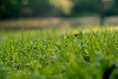 Grass Background : Abstract Natural Background Green Grass With A Beautiful Bokeh. Dew In An Early M poster