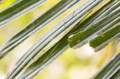 Small fancy stick insect perching on green leaf with blurred bright forest background at Khao Yai Na poster