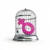 Cage For Birds Women