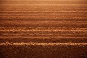 image of plowed field  - Ploughed red clay soil agriculture fields ready to sow