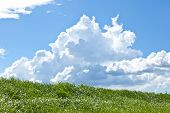 stock photo of thunderhead  - This is a picture of grass and thunderhead I have taken in August - JPG