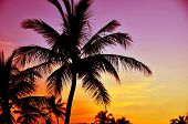 image of pinky  - Tropical Sunset - JPG