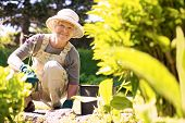 foto of grandmother  - Happy elder woman with gardening tool working in her backyard garden - JPG