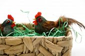 Easter chicken with Easter grass