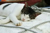 Cat Sleeping In Shipyard Outdoor Hong Kong