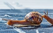 stock photo of olympiade  - snail finish encouraged by its congener crosses the finish line