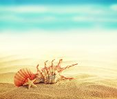 image of starfish  - Summer concept of sandy beach - JPG