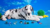 image of great dane  - Black great dane puppy with colored glass and flower on the blue background with clouds texture - JPG