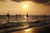 foto of fishermen  - Silhouettes of the traditional stilt fishermen at the sunset near Galle in Sri Lanka - JPG