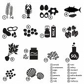 picture of mollusca  - set of typical food alergens for restaurants and meal eps10 - JPG