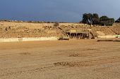 stock photo of great horse  - Hippodrome stage ruins in Caesarea Maritima National Park - JPG