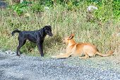 stock photo of stray dog  - Close up dirty stray dogs playing together on street at day time  - JPG