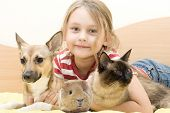picture of guinea  - child and a cat and a dog and guinea pig - JPG