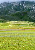 image of plateau  - Piano Grande di Castelluccio  - JPG