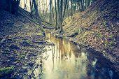 foto of wetland  - Vintage photo of wetlands at springtime - JPG
