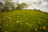 foto of unique landscape  - landscape of rural dandelion meadow with tree house fisheye lens distortion - JPG