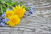 stock photo of eukaryote  - Dandelion and forget - JPG