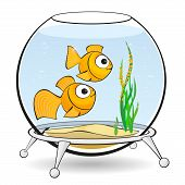 picture of goldfish  - couple goldfish in an aquarium looking at caviar - JPG