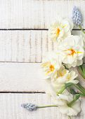 picture of daffodils  - Fresh spring white daffodils and blue muscaries on white painted wooden background. Selective focus. Place for text. Toned image. ** Note: Soft Focus at 100%, best at smaller sizes - JPG