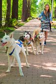 picture of sled-dog  -  girl riding scooter in team of two sled dogs in summer park - JPG