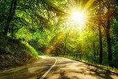 stock photo of sun flare  - Landscape shot with the gold sun rays illumining a scenic road in a beautiful green forest with light effects and shadows - JPG