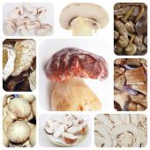 picture of porcini  - Vegetarian food collage - JPG