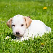 pic of little puppy  - Mixed - JPG