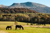 foto of wild horses  - wild horses living in Bieszczady mountains in southern Poland - JPG