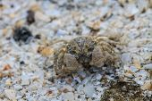 image of hermit crab  - close up crab on a background of sand  - JPG
