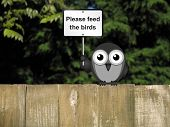 stock photo of bird fence  - Comical bird with please feed the birds sign perched on a timber garden fence against a foliage background - JPG